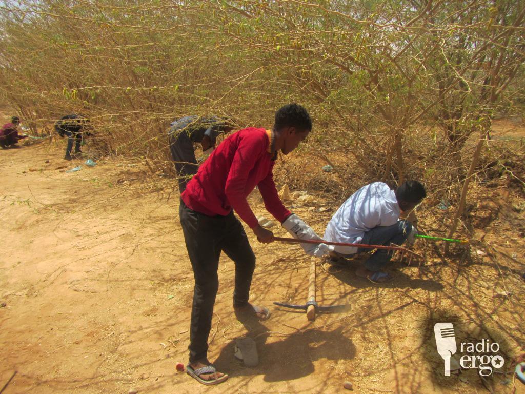 Invasive trees hurt livelihoods of Somali herders and farmers in Sool